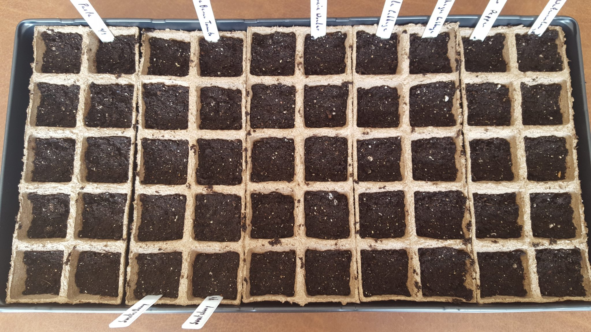 Planting Seeds Indoors